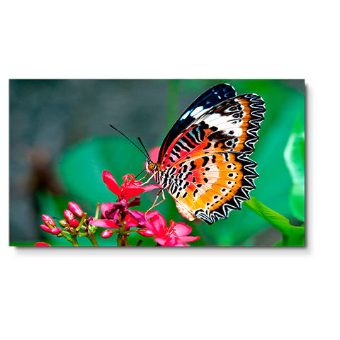 NEC UN492S 49in. Ultra-Narrow Bezel Professional-Grade Display