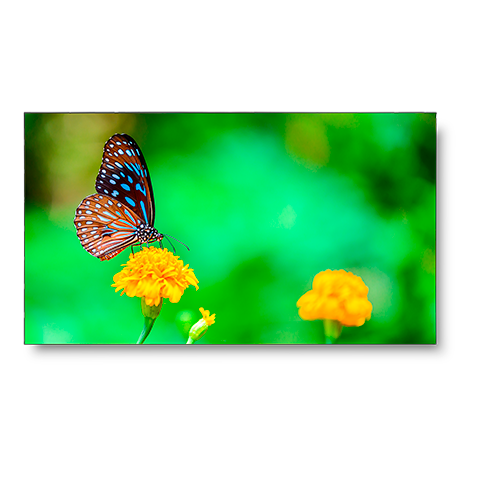 NEC UN492VS-TMX9P 49in. LED-Backlit 1.8mm 2x2 Video Wall Bundle